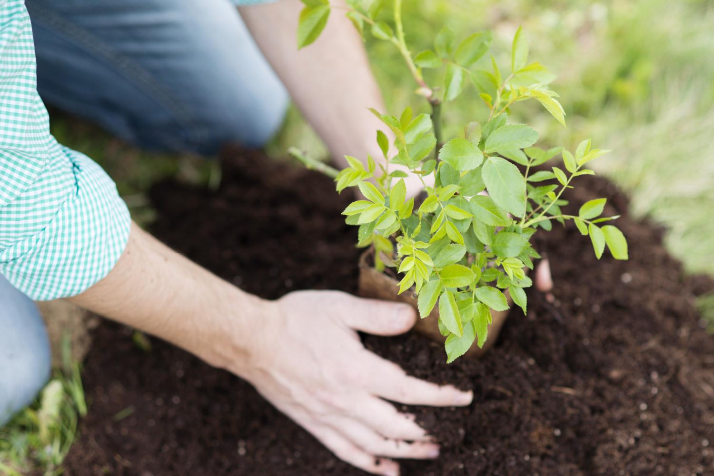 Que sembrar en Septiembre y las tareas del huerto